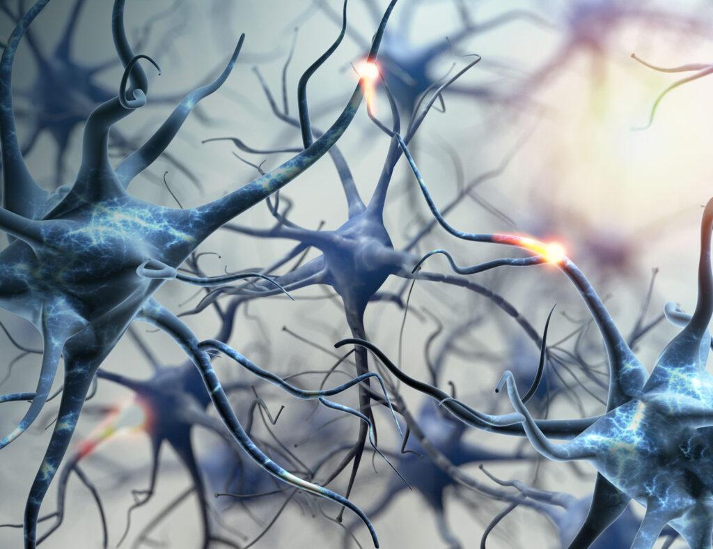 Neuronen-netzwerk